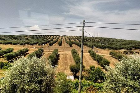 Foto 3 - Plantação geometrizada... recente